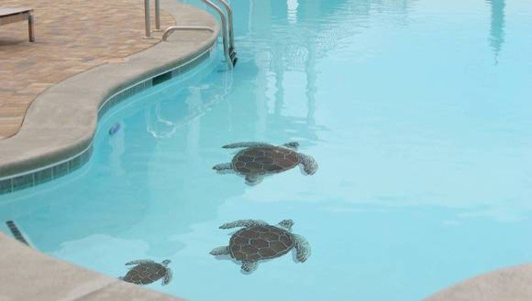 Sea turtle mosaic artwork for swimming pools