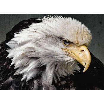 The Bald Eagle