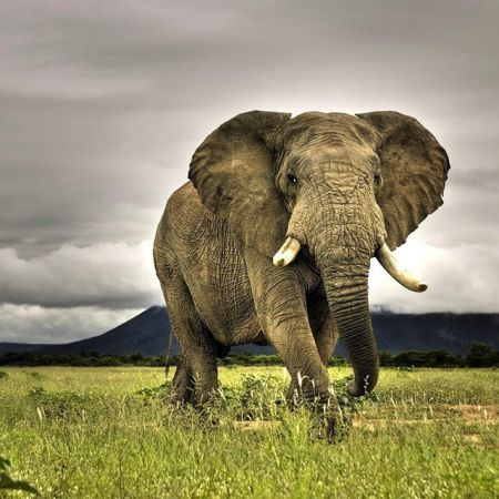 The Elephant Whisperer by The Earth Organization